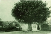 The old Cross Tree at the junction of Clevedon Road with Walton Street